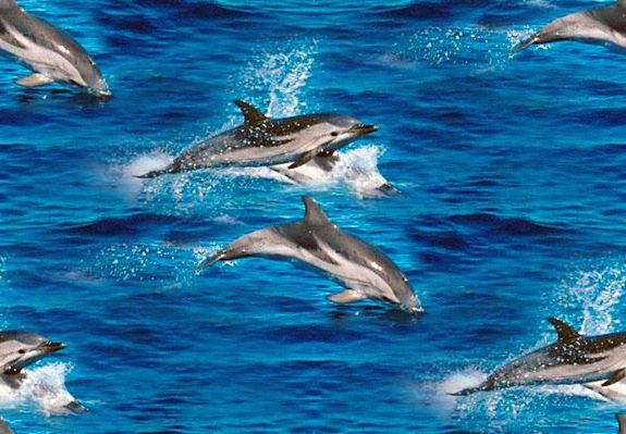 Jumping Dolphins Seamless Repeating Background