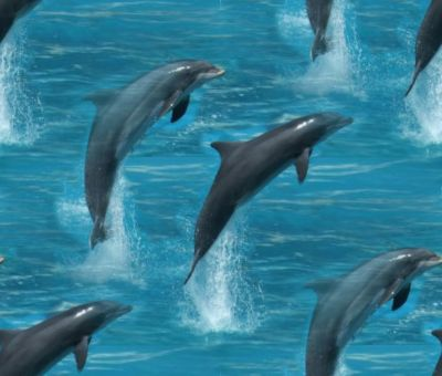Jumping Dolphins Seamless Background 2