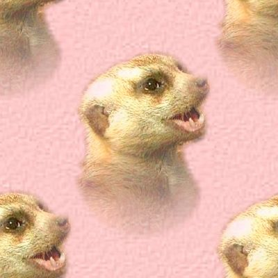 Cute Meerkat Baby In Pink Background