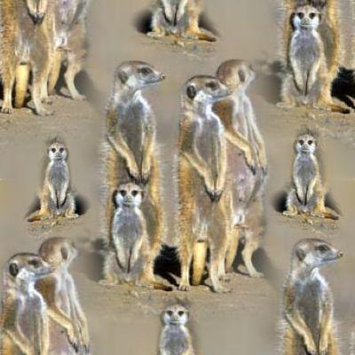 Meerkat Family Background Seamless Tile