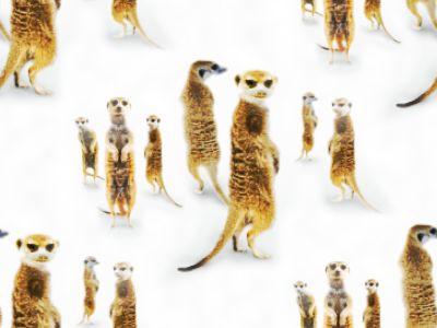 Meerkat Mob Background Seamless