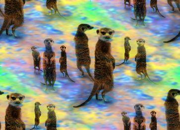 Funky Meerkat Mob Background Seamless
