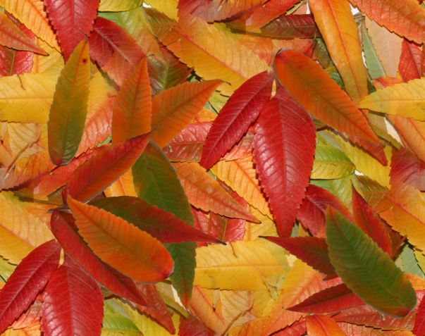 Autumn Leaves Fall Leaves Seamless Background Image