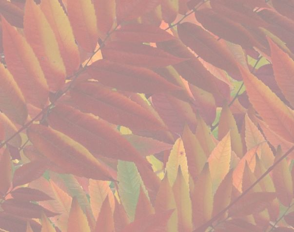 Red Autumn Leaves matching seamless paper