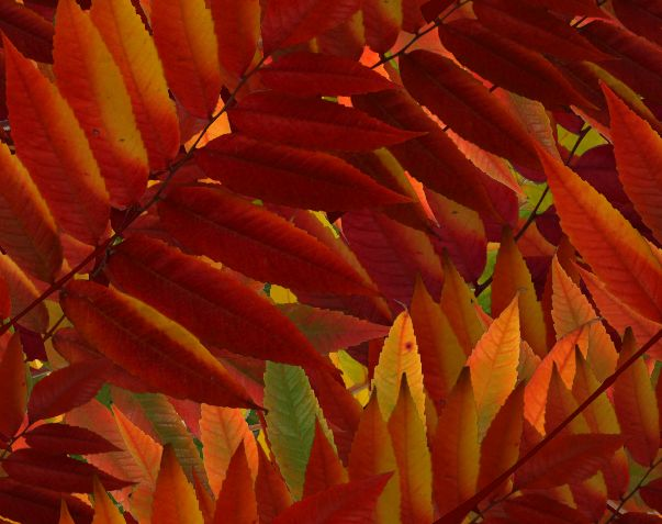 Red Autumn Leaves Fall Leaves Seamless Background