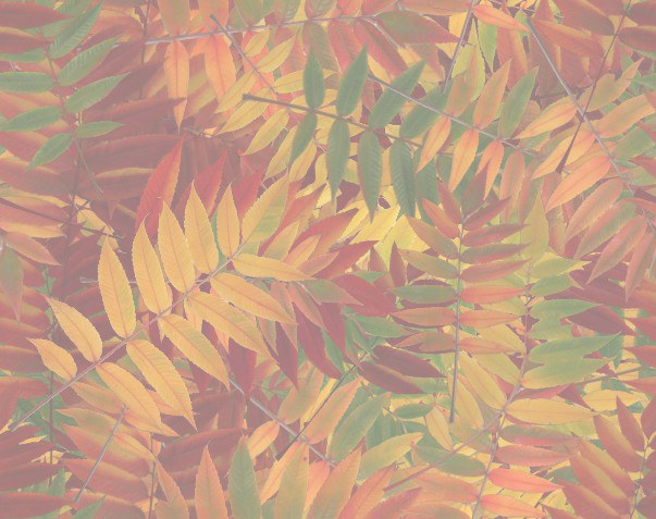 Colored Fall Leaves seamless matching paper.