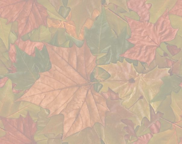 Large Colorful Leaves matching repeating paper