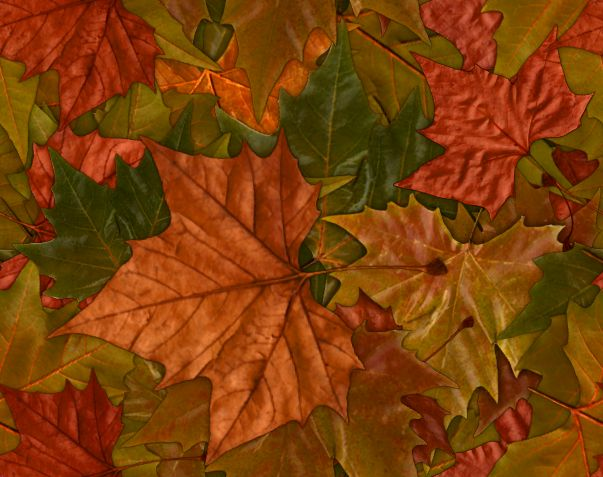 Large Colorful Leaves Fall Autumn Background Image Seamless