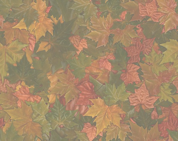 Colorful Fall Leaves Autumn Leaf matching paper