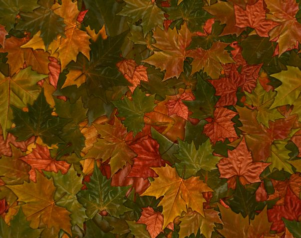 Colorful Fall Leaves Autumn Leaf Seamless Background