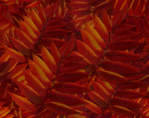 Red Fall Leaf Seamless Autumn Background