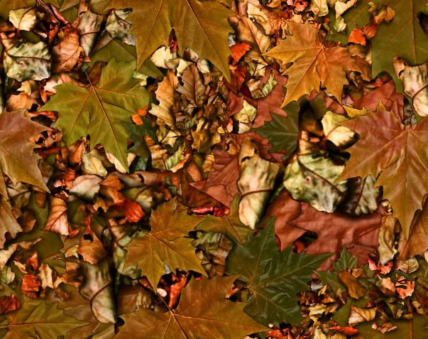 Fall Leaves Fallen Autumn Leaves Seamless Background