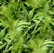 Forest Grass Seamless Background Tile Image