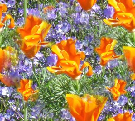 Orange Blue Meadow Flowers Seamless Background Tile