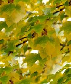 Yellow Leaf Seamless Background Tile