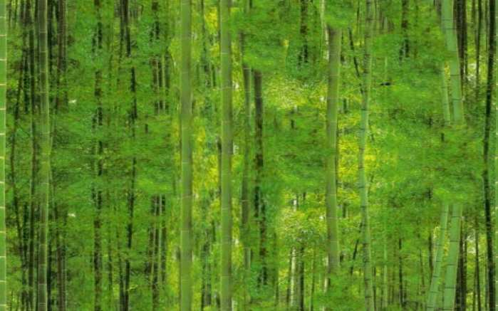 Lucky Bamboo Forest Seamless Background Tile