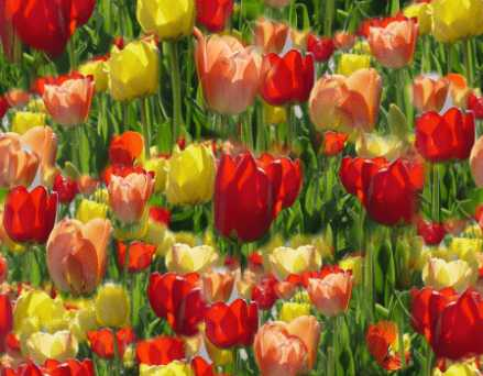 Spring Tulips Seamless Background Tile
