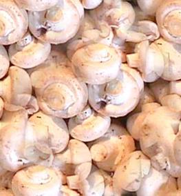 Mushroom Seamless Background Tile Image