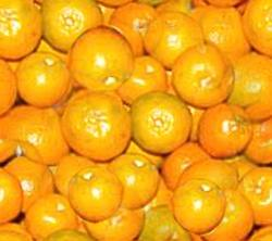 Oranges Satsumas Seamless Background Tile