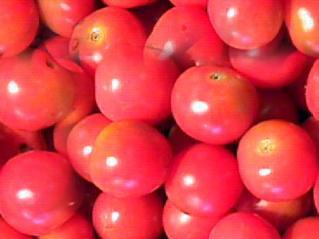 Tomato Seamless Background Tile