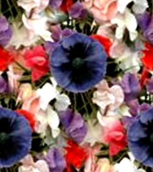 Poppy Sweet Pea Bouquet Seamless Background Tile