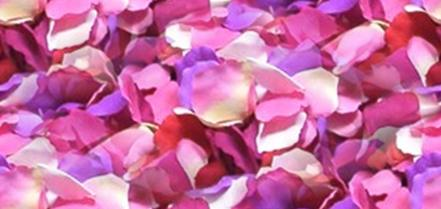 Rose Petal Wedding Seamless Background Tile