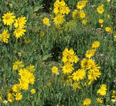 Alpine Meadow Yellow Flowers Seamless Background Tile