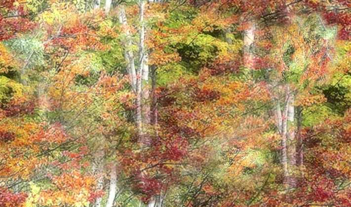 Art Birches Large Seamless Background