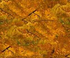 Autumn Foliage Gold Seamless Background Tile Image Picture