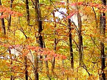 Autumn Forest Light Seamless Background Tile Image Picture