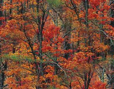Autumn Forest Colors Seamless Background Tile Image Picture
