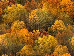 Autumn Forest Tile Seamless Background Tile Image Picture