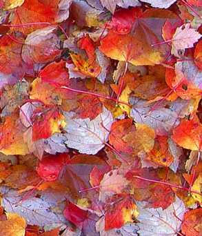Autumn Leaf Seamless Background Tile Image Picture