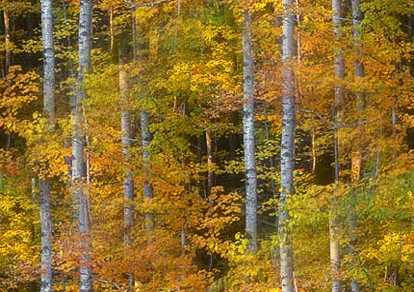 Early Autumn Woods Seamless Background Tile Image Picture