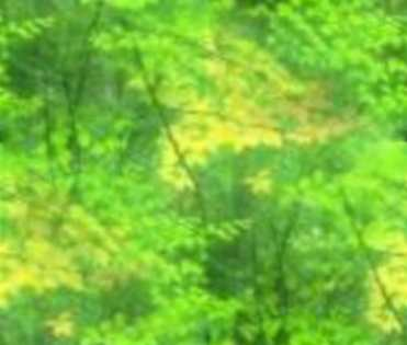 Bright Forest Green Leaves Soft Background Tile Picture Image