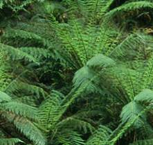Fern Forest Fern Seamless Background