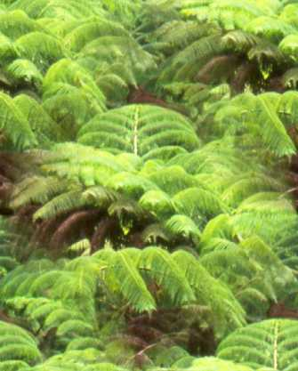 Alien Fern Tropical Fern 1 Seamless Background