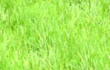 Bright Meadow Grass Seamless Background Tile Image Picture