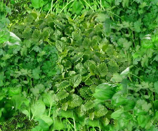Italian Herbs Seamless Background Tile
