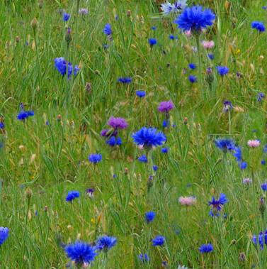 Meadow Grass Blue Flowers Seamless Background Tile