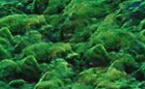 Mossy Rocks Seamless Background