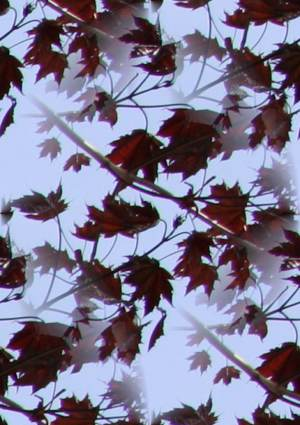 Pretty Leaf Repeating Background
