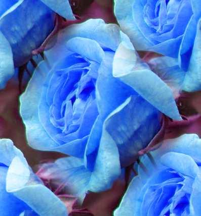 Blue Rose Seamless Background Tile Image