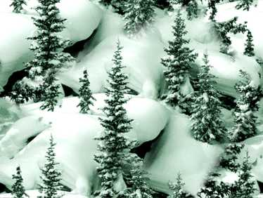 Tree backgrounds - Images of pine trees in snow ...