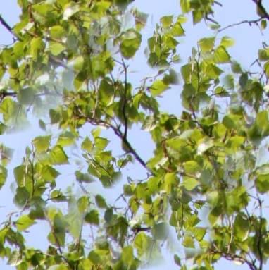 Spring Birch Leaf Repeating Background