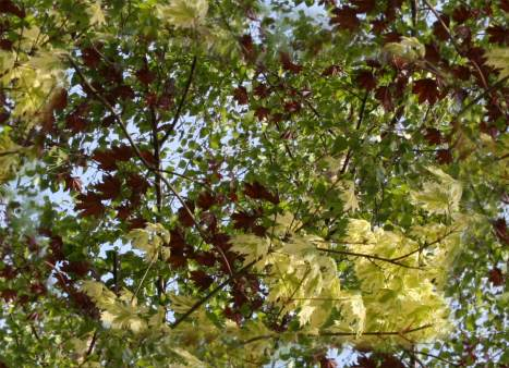 Spring Tree Leaves and Foliage Repeating Background