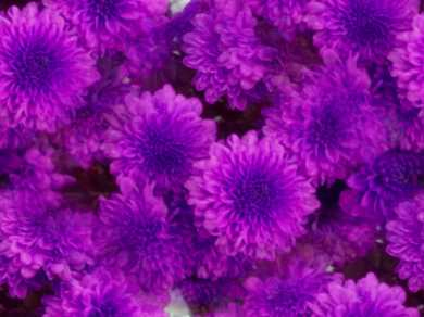 Ultraviolet Flowers Seamless Background