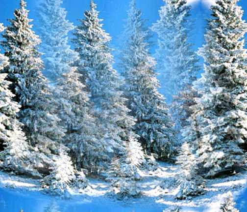 Winter Wonderland Pine Snow Forest Seamless Background Tile
