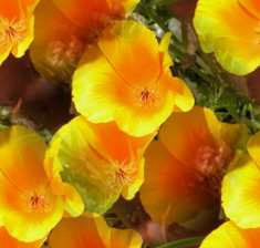 Yellow Flowers Seamless Background Tile