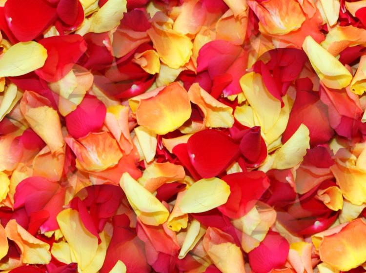 Colorful rose petals seamless repeating fill tile